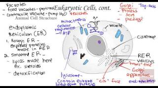 Cell Structure and Function Subcellular Structure