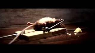 Mouse vs Mouse Trap
