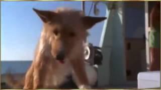 مؤثر جدا هذا الدلفين يساعد الكلب الذي كان على وشك أن يموت