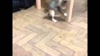 قطة كوميدية جدا