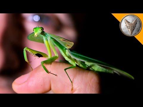 Incredible Leaf Mantis