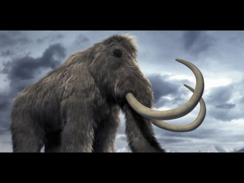 watch Amazing Life Mammoths of The Ice Age Discovery Documentary 2015 HD