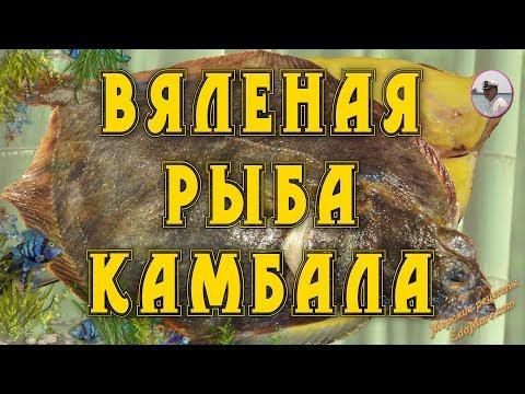 Вяленая рыба камбала от Petr de Cril'on - youtube,youtuber,utube,youtub,youtubr,youtube music,unblock youtube,youtube videos,you