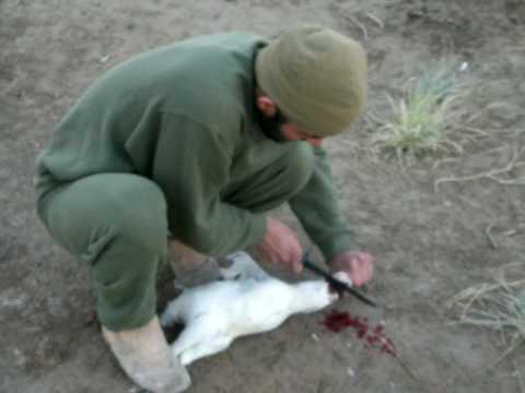 marines cutting chicken head off