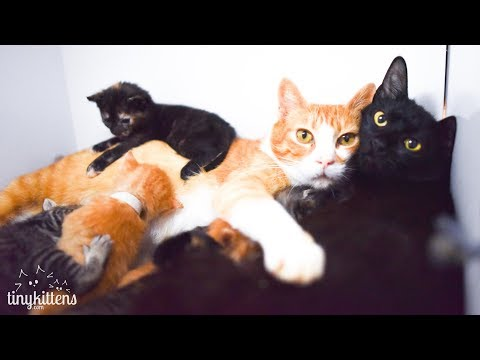Xxx Mp4 LIVE Feral Caternity Ward And Kitten Nursery TinyKittens Com 3gp Sex