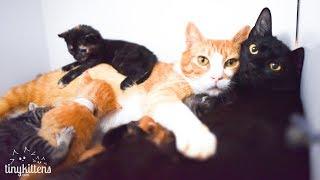 LIVE: Feral caternity ward and kitten nursery - TinyKittens.com
