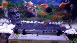 Aquarium Heater Tips & trick in Hindi.