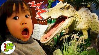 おでかけ 恐竜に会いに行ったよ❤ダイナソー Toy Kids トイキッズ anpanman