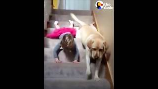Girl, Dog Slide Down Stairs Together | The Dodo