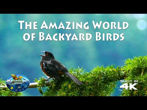 The Amazing World of Birds 4K