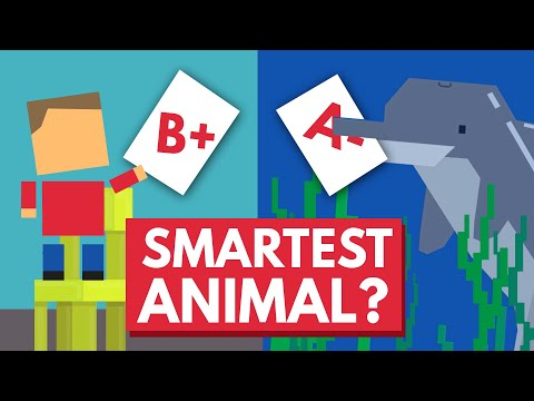 Which Animal Is The Smartest