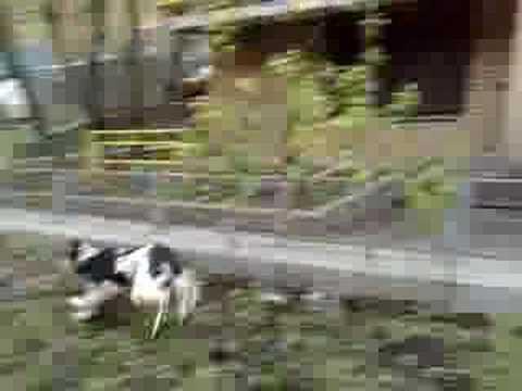 xxx-dog
