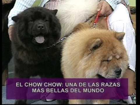 Chow Chow Koo Kio Canal Cronica TV Programa del Dr. Enrique Romero