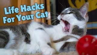 Cat Hacks To Save You Money