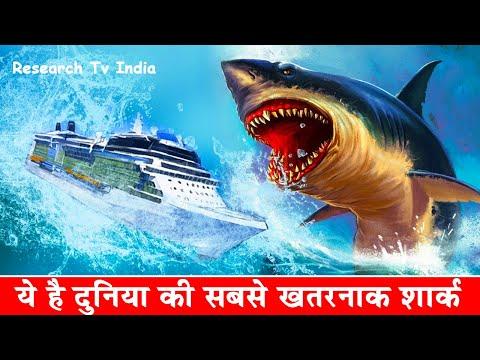 Xxx Mp4 दुनिया की सबसे खतरनाक शार्क Megalodon The Monster Shark Megalodon Sharks Still Lives 3gp Sex