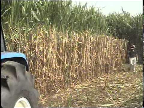 WALPECO Sugar Cane Harvester Trash Extractor Planter Colombia