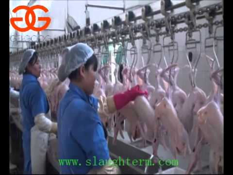 Made in China Duck Slaughter Line Duck Slaughtering House Duck Slaughter