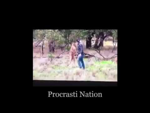 Man Punches A Kangaroo Thug Life