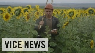Exclusive VICE News Footage of MH17 Aftermath: Russian Roulette (Dispatch 60)