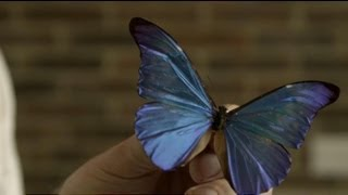 Butterflies and metamaterials with Professor Roy Sambles