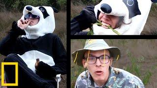 Giant Panda Mating Season | Wildlife Documentary