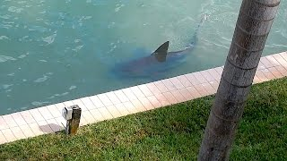 9ft Bull Shark Spotted In Florida