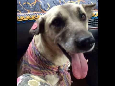 Xxx Mp4 Wonderful World For Lucy Our Street Dog RIP 3gp Sex