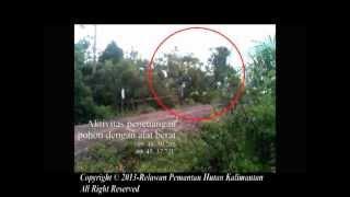 RPHK-Video Penebangan oleh Alat berat di areal Konsesi PT DTK
