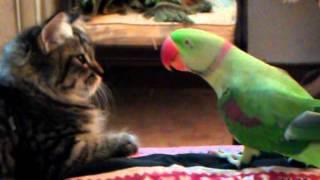 Cat vs Parrot