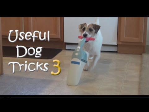 Useful Dog Tricks 3 performed by Jesse