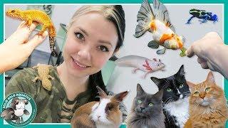 Feeding All My Pets! // VLOGMAS DAY 8