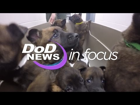 DoD News In Focus From Puppy to Soldier