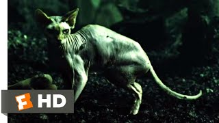 The Book of Eli (2010) - Getting Cat Food Scene (1/10) | Movieclips
