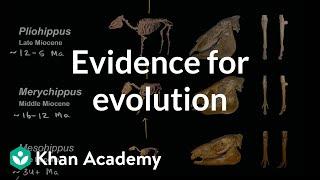 Evidence for evolution    Biology   Khan Academy