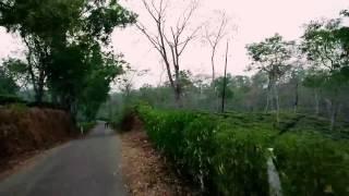 Bangladesh biggest Tea Garden