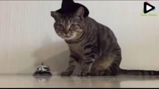 373 cat Eating Food Using Callingbel 0 28