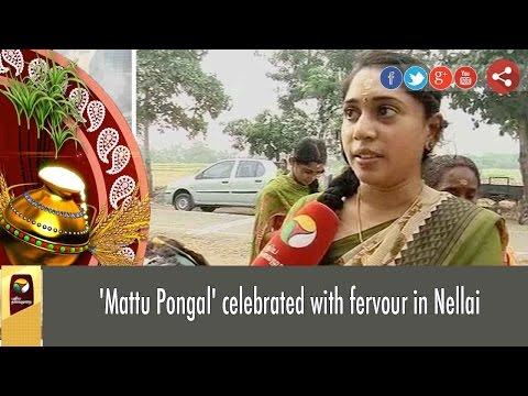 Xxx Mp4 Mattu Pongal Celebrated With Fervour In Nellai 3gp Sex