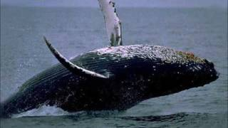 Le chant des baleines ~ Whales Singing and Relax Music