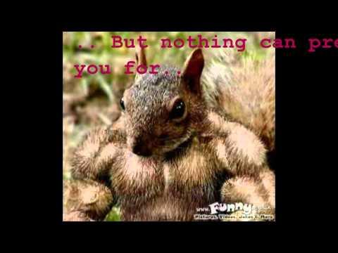 Xxx Mp4 Super Squirrel 2000 XXX 3gp Sex