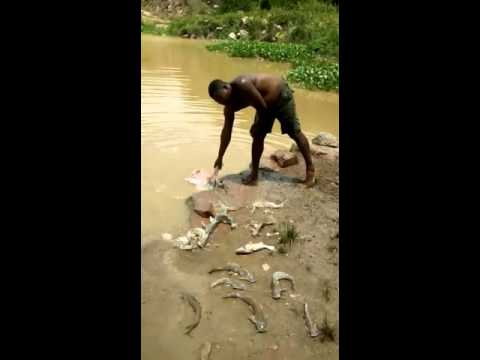 Amazing type of fish hunting you never see before funny videos