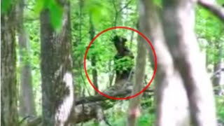 5 Disturbing FOREST ENCOUNTERS Caught On Camera