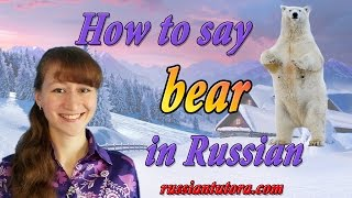 Russian word for polar bear | Polar bear in Russian translation or How to say polar bear in Russian