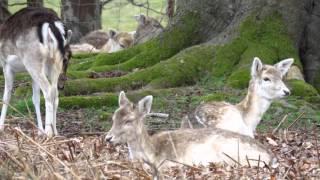 Knole Park UK