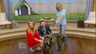 Martha the World's Ugliest Dog