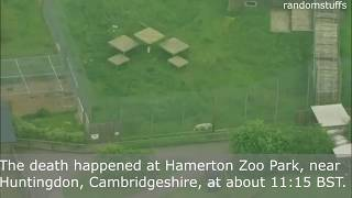 Update : Zookeeper killed after tiger attack at Hamerton Zoo Park(Video of tiger)