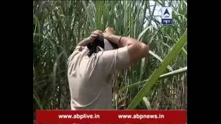 Ground Report: After BSF alert, Punjab Police conducts search operation in sugarcane fields