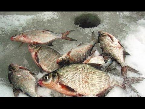 прогноз клева рыбы в заволжске