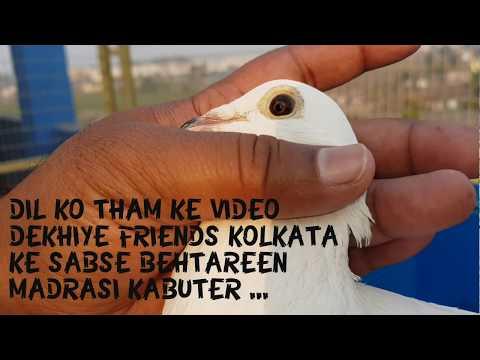 Xxx Mp4 KOLKATA KE SAB SE BEHTAREE MADRASI KABUTER By Zeeshan S Loft Kolkata West Bengal INDIA 3gp Sex