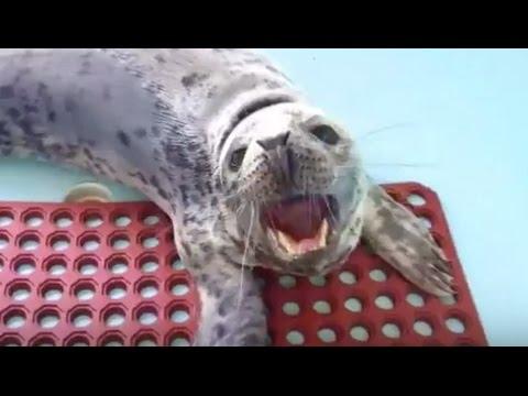 LIVE Seals Live Stream The Dodo