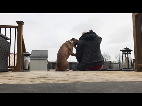 Boxer Pup and Man Share a Bonding Moment